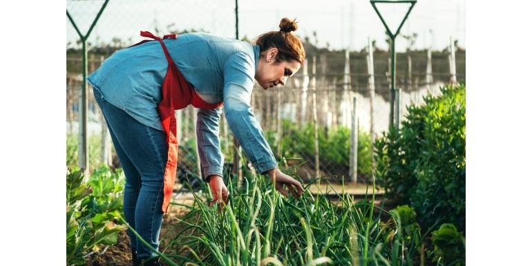 Czym różni się żywność ekologiczna od konwencjonalnej?