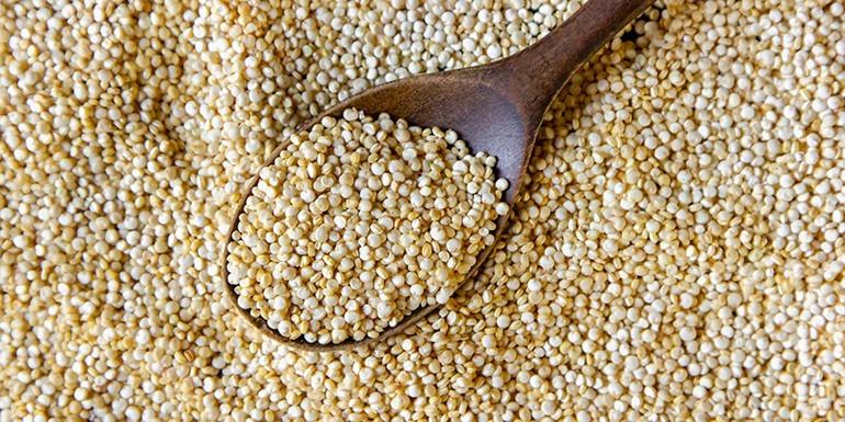 Komosa ryżowa – właściwości i zastosowanie